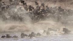 Gnu Migration am Mara Fluss