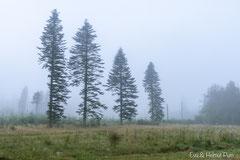 Morgennebel im Hirschrevier
