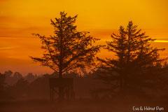 Morgennebel und Morgenrot im Hirschrevier