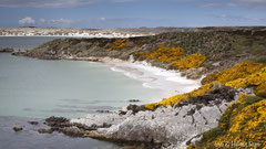 Küstenabschnitt auf Falkland