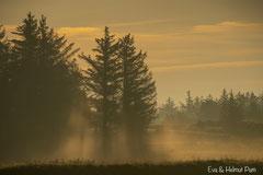 Die ersten Sonnenstrahlen durchbrechen den Nebel