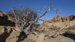 Felsstrukturen und dürrer Baum