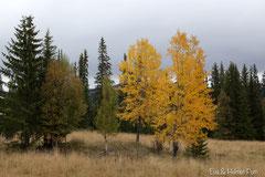 Herbstliche Verfärbung