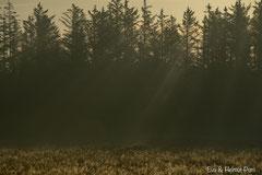 Morgennebel und erste Sonnenstrahlen