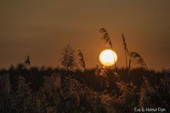 Abenndstimmung: Sonnenuntergang am Seeufer