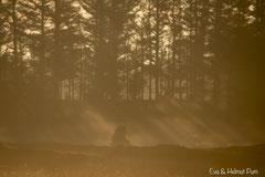 Sonnenaufgang im Hirschrevier