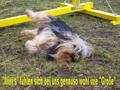 Hundepension für kleine und große Hunde