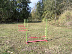 Sport in der Hundepension