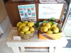 cafe gratoさんの特別な配慮で設置させていただいたレモンです。