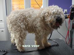 Sara voor