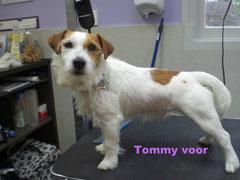 Tommy voor