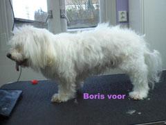 Boris voor behandeling