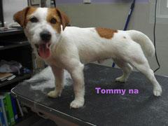 Tommy na