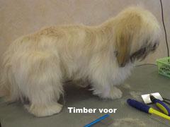 Timber voor behandeling