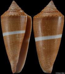 Conus furvus (Philippines, 44,7mm)