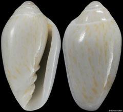 Prunum hartleyana (Bahamas, 6,3mm) F++ €5.00