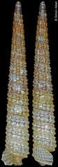 Subulophora rutilans (Philippines, 8,7mm) F+++ €5.00