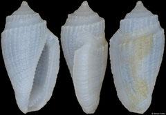 Eucithara souverbiei (Philippines, 6,3mm)