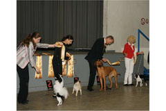 Drusus Jgd. Best in Show  4   Recklinghausen 11.03.2012
