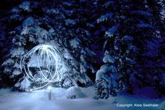 Waldlicht I