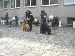 Ника 30.04.2011г. Чемпионат чау-чау г.Минск