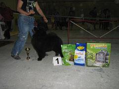 Ника--Лучший щенок выставки 22.05.2011г. г.Новополоцк