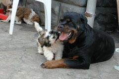 Лайза и Пантера