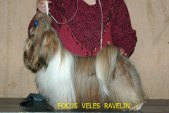 FOCUS  VELES  RAVELIN