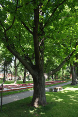 L'arbre planté par Gagarine
