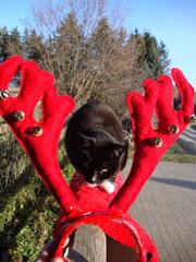 Pia hat Weihnachten