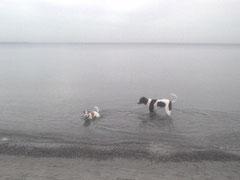 Carlo und Jacky im Wasser