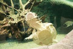 Unterwasserschildkröte von unten :)