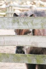 Hinter Gittern- der Ponyknast