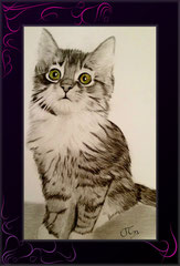 Katzenzeichnung nach Foto