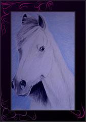 Pferdeportrait mit blauem Hintergrund
