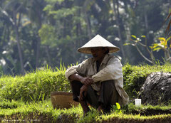 Homme Balinais dans une rizière à la pause déjeuner