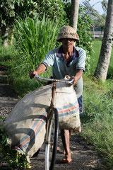 Cultivateur Balianais