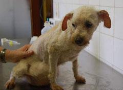 die kleine MARIA mit einem Riesentumor hat nach ihrer OP ein schönes Zuhause gefunden im August 2011