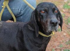 WILMA, das Bernsteinäuglein, hat im Mai 2012 ihren Altersruhesitz gefunden :)  Sie zieht zu Andrea nach NRW und muß nicht ihr Leben im Tierheim beenden. Unser Miro mit Dosenöffnern hat dabei geholfen und für Wilma die Ausreise spendiert :)