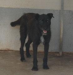 RAQUEL - blind, seit 2007 im Tierheim. Januar 2013: RAQUEL IM GLÜCK ! Sie durfte in ihr eigenes Körbchen zu einer lieben Familie in die Niederlande reisen. DANKE an Pinky + Fam. Dymowski für die Ausreisepatenschaft :)