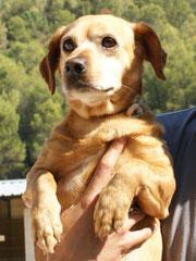 CHIPSA - geboren 2001  -   sucht Altersruhesitz - Omi CHIPSA hat im Oktober 2012 ein schönes Zuhause gefunden. Sie wohnt nun bei ihrem neuen Frauchen in Haan und hat ein kuscheliges Körbchen mit Rentengarantie  :)