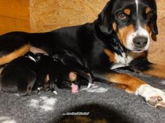 Sennenhunde aus dem Flößerdorf