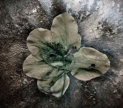 De la serie Des-Armonias / sin titulo / Fotografía