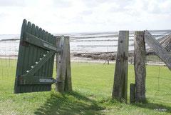 Das Tor zu den Halligen ...