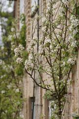 Klostergarten ...