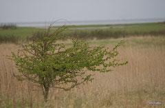nordfriesische Savanne?