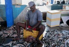 Fische reinigen, Beruwela,  Sri Lanka