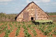 Casa de Tabaco, Takak trocknen, Kuba