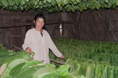Takak trocknen, Kuba, Casa de Tabaco