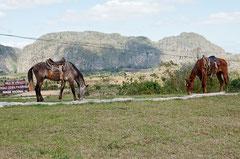 Ausritt mit Pferden, Viñales